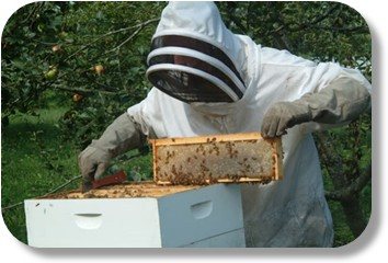 Beekeeping Short Course Begins Friday! « Davie County, NC