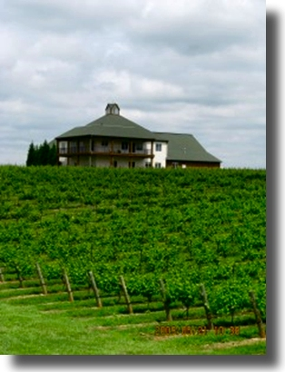 Davie County Vineyards - Raylen