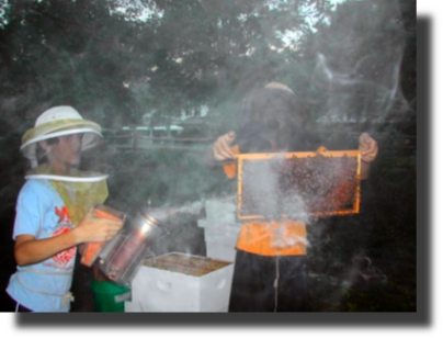 Backyard Beekeepers