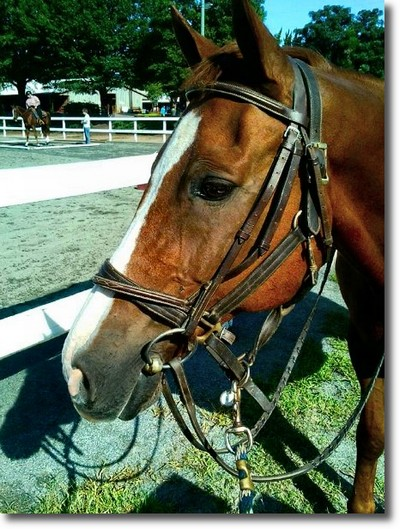 Dixieland Farm Horse