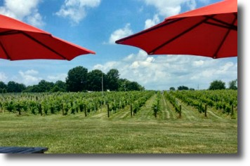 Davie County Vineyards - Lazy Elm